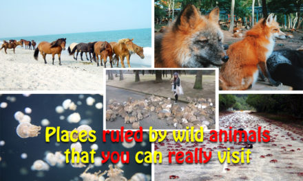 Places ruled by wild animals that you can really visit