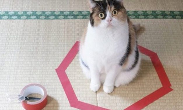 Why do cats love to sit in the strangest places? Someone did an interesting experiment.