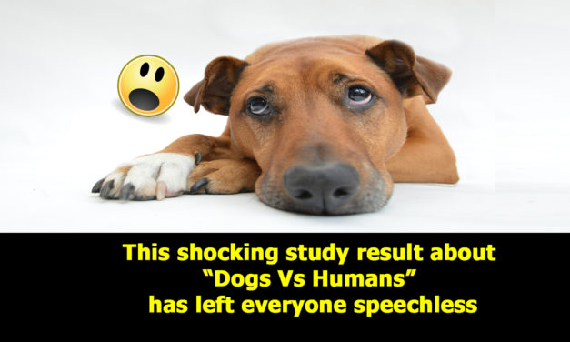 """This shocking study result about """"Dogs Vs Humans"""" has left everyone speechless"""