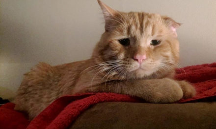"Shelter Considers A Cat as ""Unadoptable"" and decides To Euthanize Him. An Hour Later…"