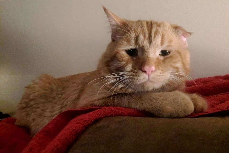 """Shelter Considers A Cat as """"Unadoptable"""" and decides To Euthanize Him. An Hour Later…"""
