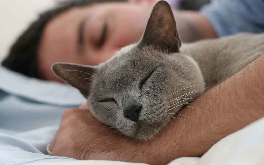 It's Real, Now You Can Become A Professional 'Cat Cuddler'!