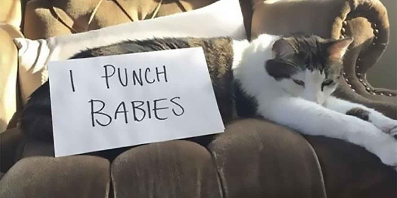 20 Rude AF Cats Being Shamed For Their Kitty Crimes